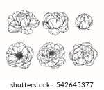 vector collection set of peony... | Shutterstock .eps vector #542645377