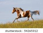 Nice Young Appaloosa Horse...