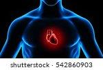 3d illustration human body heart | Shutterstock . vector #542860903