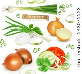 onion set  realistic vector... | Shutterstock .eps vector #543075523