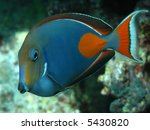 Small photo of Achilles Tang