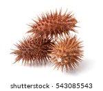 Dry Xanthium Strumarium...