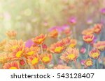 close up of pink flowers with... | Shutterstock . vector #543128407