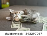Stock photo gray kitten with money 543297067