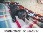 Small Cute Sleeping Black Cat.