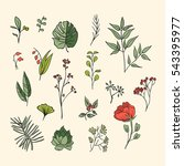 plants and herbs icons set | Shutterstock .eps vector #543395977