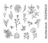 plants and herbs icons set | Shutterstock .eps vector #543396013
