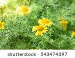 spring background with... | Shutterstock . vector #543474397