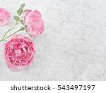 Winter Background   Roses...