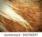 horse fur  a wonderful... | Shutterstock . vector #543700597
