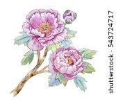 watercolor illustration floral...   Shutterstock . vector #543724717