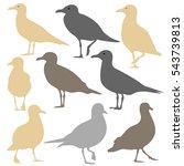 seagull silhouette isolated | Shutterstock .eps vector #543739813