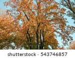 the branches of the crown of a ... | Shutterstock . vector #543746857