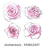 Rose Set Isolated. Realistic...