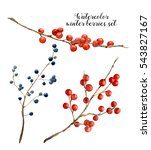 Watercolor Winter Berries Set....