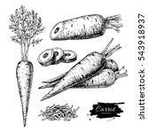 carrot hand drawn vector... | Shutterstock .eps vector #543918937