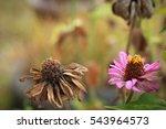 Flower And Dead Flower