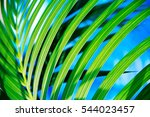 palms leaves green background | Shutterstock . vector #544023457