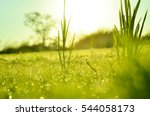Field Of Grass And Sun In...