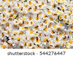 Bees Sitting On White Daisies