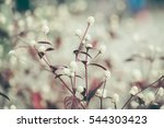 Small photo of Alternanthera dentata,Purple knight and circle of bokeh background