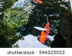 The Beautiful Koi Fish In Pond...