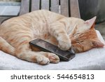 Orange Tabby Cat Sleep With...