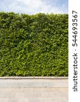 green plant wall texture with... | Shutterstock . vector #544693567