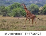 Giraffe In The Beautiful Natur...
