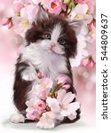 Stock photo kitten watercolor illustration 544809637