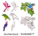 birds set coloring book page.... | Shutterstock .eps vector #544848877