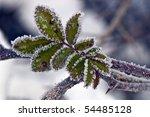 early morning frozen blueberry... | Shutterstock . vector #54485128