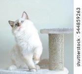 Stock photo funny cat 544859263