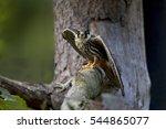 eurasian hobby | Shutterstock . vector #544865077