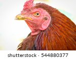 closeup flock of chickens on... | Shutterstock . vector #544880377