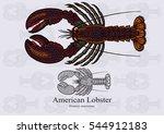american lobster  true lobster  ...