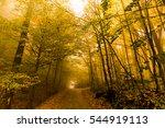 autumn landscape image | Shutterstock . vector #544919113