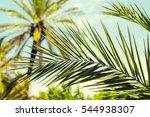 Fragment Of A Palm's Leaf Clos...