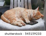Orange Tabby Cat Sleep With...