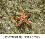 Small photo of Colorful starfish in the beach, Inhaca Island, Mozambique, Africa.