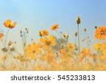 soft blurred the beautiful...   Shutterstock . vector #545233813