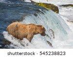 A Large Alaskan Brown Bear On...
