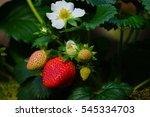 Strawberry's Garden.