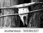 buffalo skull bandaged ropes... | Shutterstock . vector #545381527