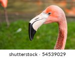 A Flamingo Watching Closely