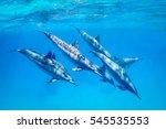 a pod of spinner dolphins   ...   Shutterstock . vector #545535553