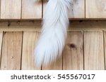 cat tail | Shutterstock . vector #545567017