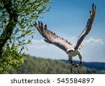 Gyrfalcon Falconry