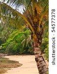 palm on a beach | Shutterstock . vector #54577378