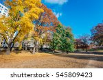 woods and autumn foliage in... | Shutterstock . vector #545809423